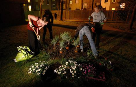 Pitching in ... guerilla gardeners plant flowers in South London.