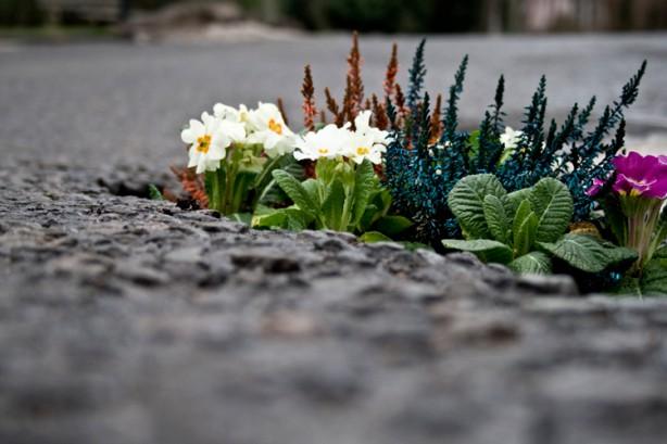 pothole_garden_01-614x409
